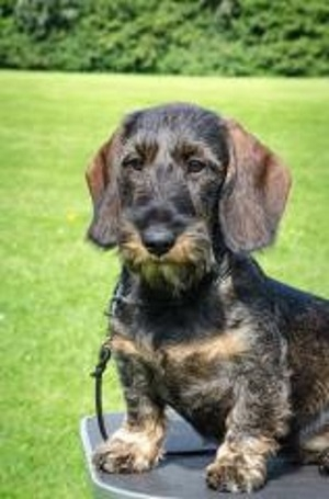 boris laursen hund